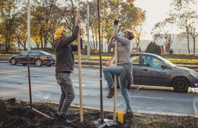 Születésnapi fricska: faültetést szervezett a GreenGo